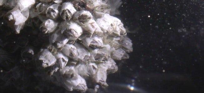 海洋生物摄入的塑料微粒,在食物链中传播,最终可能进入人体。